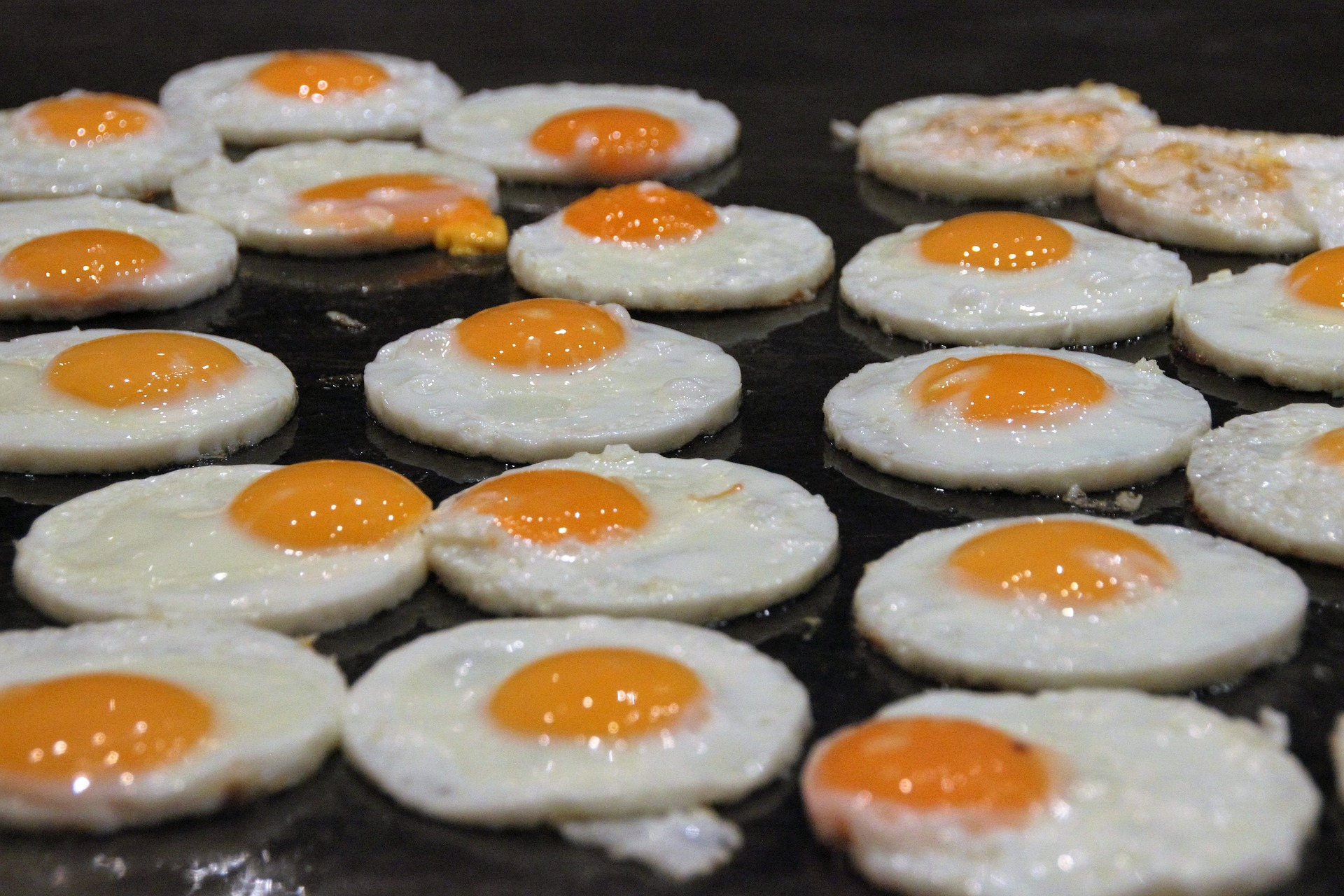 eggs _ foodservice _ dairy